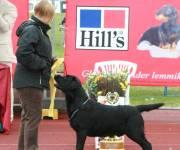 6.6.2010 Tallinn INT (ESTW-10), judge in breed and BIS Luis Pinto Teixeira (Portugal): Martti BOB CACIB BIG-1 BIS-3