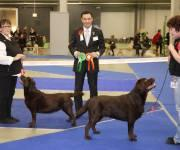14.11.2010 Jyv�skyl� INT: Chili was BOS with CACIB and CAC