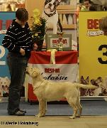 13.11.2011 Helsinki all-breed puppy show: Elli was BIG-3!