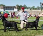 19.8.2006 Tallinn (Labrador Retriever Specialty), Martti BOB-junior and Milly BOS-junior (judge Jan Roger Sauge, kennel Mambrinos, Norway)