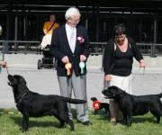 22.8.2009 Luige, Retriever Specialty, Estonia: Martti BOB BIS-2, judge John R. Crook and Milly BOS