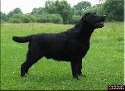 PL CH Adventurer's Row The Boat (Danjacs Finnegan - Mellows Killing Fantasy), owner: Kociokwik Labradors, Poland